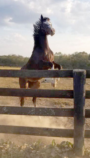 race horse trainer